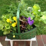 The Life of a Container Garden, Part Two