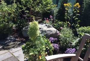 Patio Garden | Native Perennials | Catherine Volic