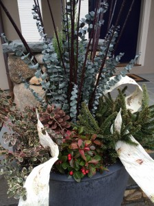 Winter Planter | Container Garden Design | Sweetgum Horticulture