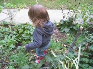 Sweetgum Horticulture | Metro West | Herb Garden for Children