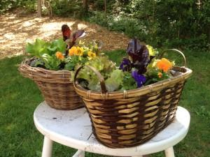 Boston | Edible Container Garden | Brown Baskets May
