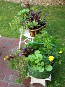 Boston | Edible Container Garden | Brown and Green Baskets July