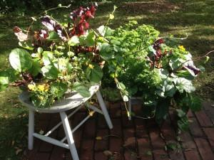 Catherine Volic | Edible Container Garden | Brown and Green Baskets October
