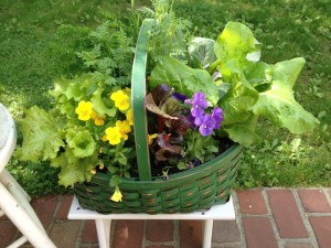 Catherine Volic | Edible Container Garden | Green Basket June
