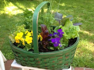 Metro West | Edible Container Garden | Green Basket May