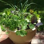 The Life of a Container Garden