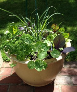 Boston | Organic Herb Garden in Containers | Lemongrass